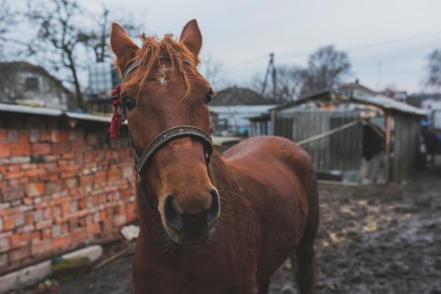 庭に茶色の馬