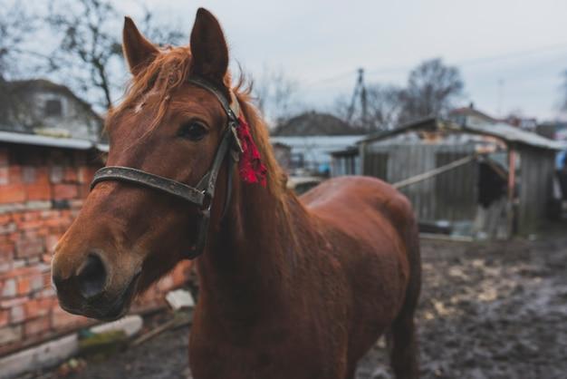 汚れた庭の茶色の馬