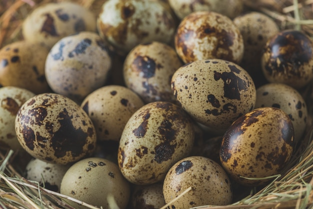 巣のウズラの卵