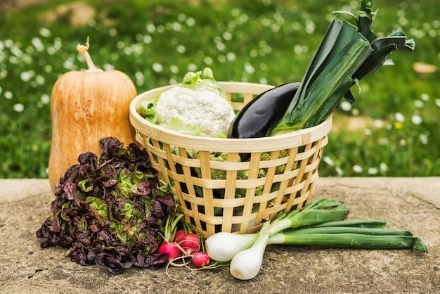 Корзина здоровых зрелых овощей в саду