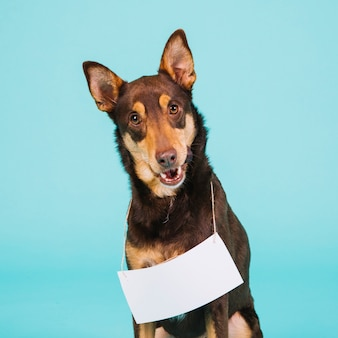 Симпатичная собака с бумажным знаком