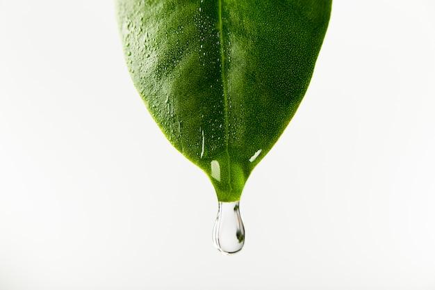 葉から水が落ちる