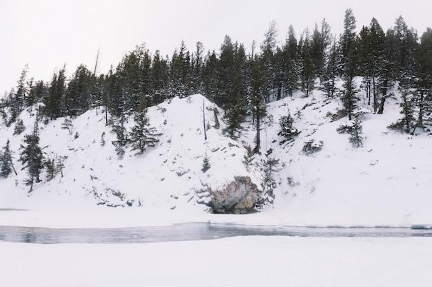 雪の多い森の川