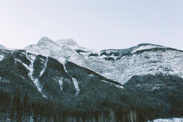雪の多い山々、松の木