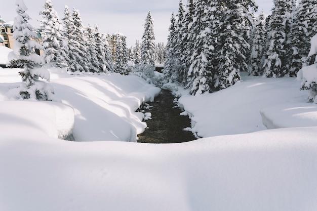 雪の多い松林の道