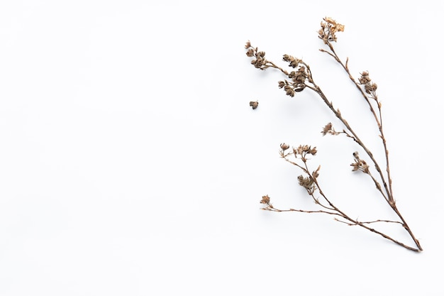 乾燥した花の小枝