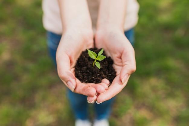 小さな植物を手に持つ手