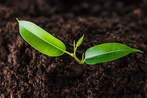 土壌から生えている緑色の芽の高い眺め