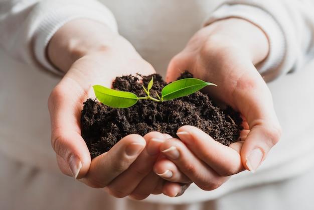 苗を土で保持する手のクローズアップ