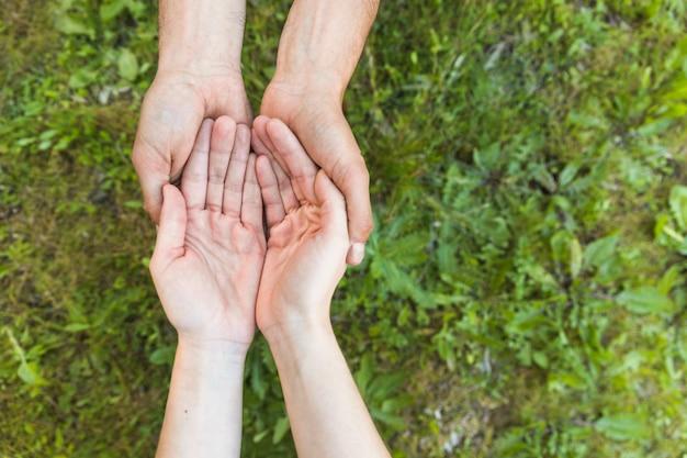 女性、草の上の保護の手