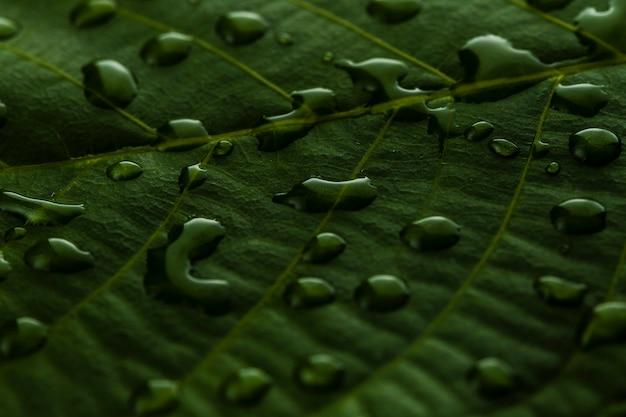 Крупным планом капли воды на листе