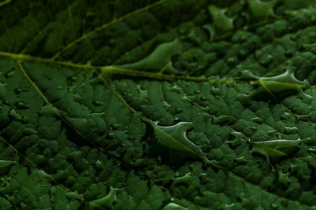 Капли дождя на зеленом листе