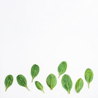 ホウレンソウの緑の葉