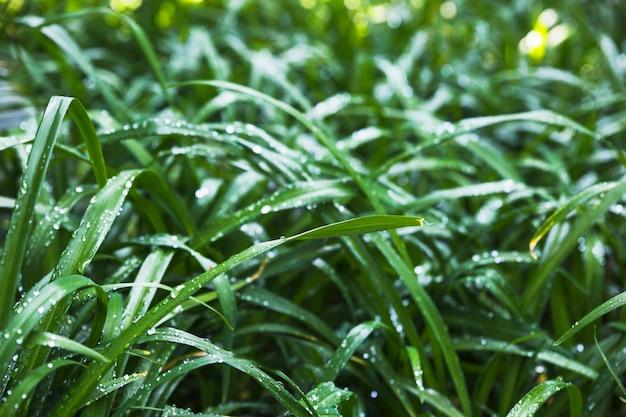 Влажная садовая трава в солнечный день
