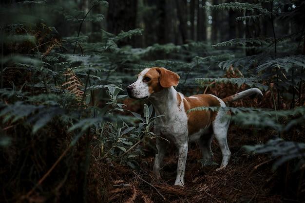 Собака, стоящая в лесу