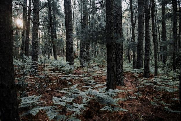 森林で生えている木々とシダ