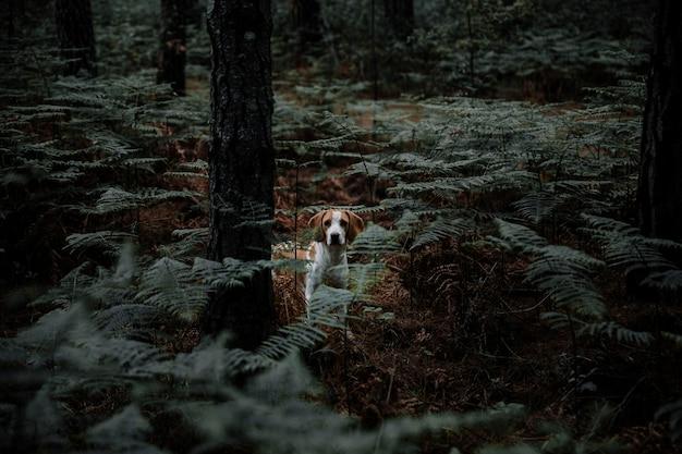 Собака, окруженная папоротниками, стоящая в густом лесу