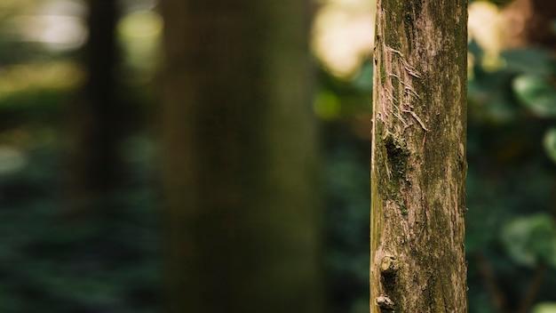 木の幹のクローズアップ