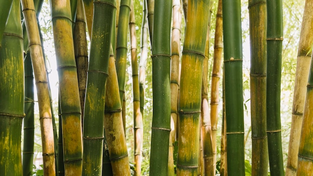 Фон бамбуковых стеблей