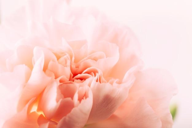 花の頭のクローズアップ