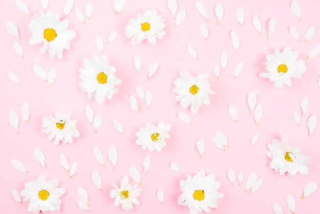 ピンクの背景に花びらと白い花のフルフレーム