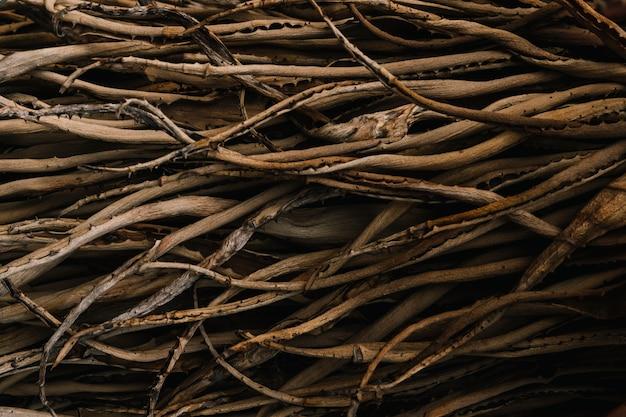 アロエベラ植物の根