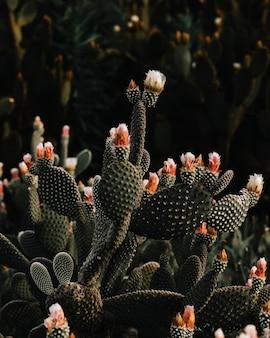 Зеленый колючий уличный кактус