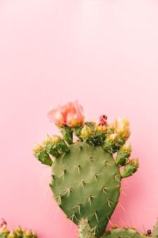 Зеленый колючий кактус на фоне розовый