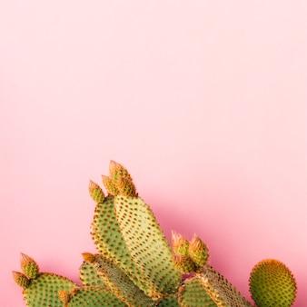プレーンな背景にエキゾチックなサボテン植物