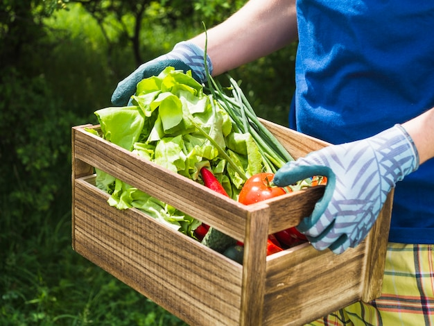 新鮮な有機野菜を箱に入れている男