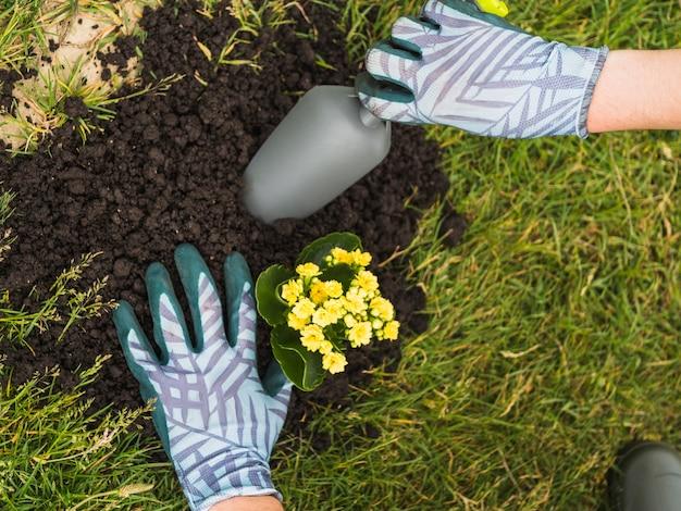 庭師が土壌に多肉植物を植える