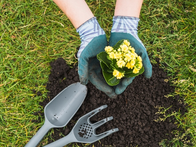 彼の手に開花植物を持って手