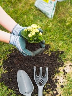 土壌に植える苗を運ぶ庭師
