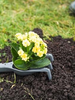 土壌の上の園芸のフォーク上の開花植物
