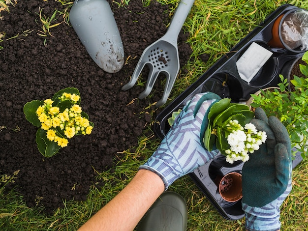 小さな新鮮な鉢植えを保持する手のオーバーヘッドビュー