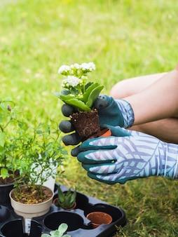 Рука, держащая саженец из горшка в саду
