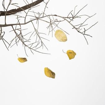 Падающая ветка дерева с сухими листьями