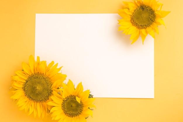 黄色の背景上の空白の白い紙にひまわり