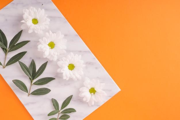 オレンジの背景に緑の小枝と白いデイジーの花