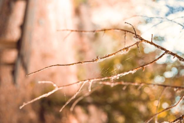 葉のない枝、森林