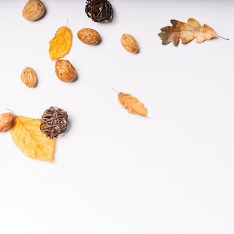 葉と桃の核