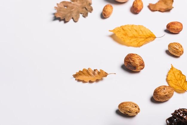 桃の穀粒と黄色の葉