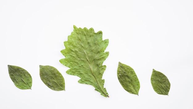 緑の葉を持つ行の配置