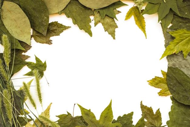 異なる色合いの緑色の葉