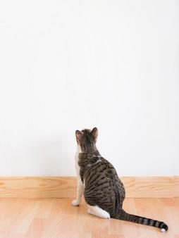 壁を見ている猫