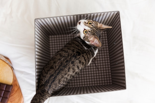 箱の中のかわいい猫