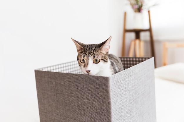 箱に座って嗅ぐ猫