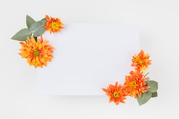 白い背景の上に紙の上に飾られたオレンジの菊の花
