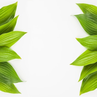白い背景に新鮮な緑の葉で作られた側の国境