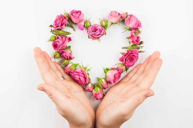 白い背景にピンクのバラのハート型を保護する手のクローズアップ